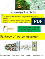 transport in plants ppt