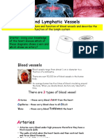 blood and lymphatic system ppt