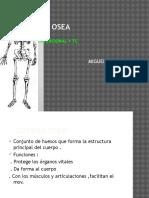 anatomia osea parte 2.pptx