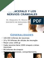 Tema 10 Cap.14 El Encefalo y Los Nervios Craneales
