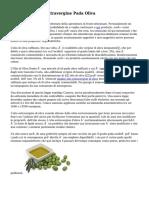 Produzione Olio Extravergine Pada Oliva