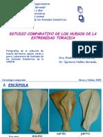 Huesos Miembro Toracico-comparado