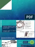 Fisiopatologia Conjuntivitis Incompleta 09022016