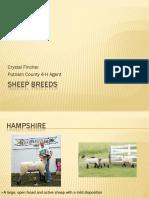 Sheep Breeds 2012