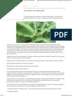 Elaboración de Papel Con Pinzote de Banano Como Materia Prima _ Eskulan