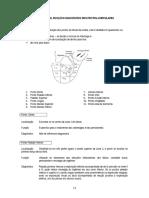 Aur 18 Localização, Função e Diagnóstico Pag 53 a 91