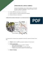 2 Electrofisiología cardíaca