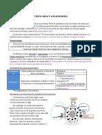 8) Urticaria y Angioedema. Raquel D