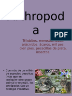 20 Arthropoda 01