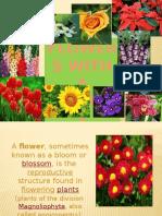 madelpowerpoint@flower.pptx