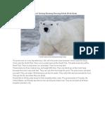 6 Contoh Text Report Tentang Binatang Beruang Kutub