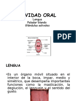 Musculos Linguales