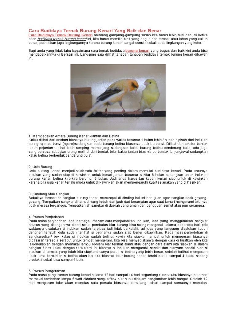 Cara Budidaya Ternak Burung Kenari Yang Baik Dan Benar
