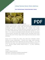 Klasifikasi Dan Morfologi Tanaman Durian