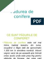 p Dureadeconifere
