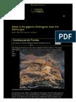 Adam is the gigantic Androgyne, even the Demiurgus _ GnosticWarrior.com.pdf