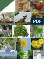 Imagenes de Flora Fauna y Sitios de Interes en Yucatan