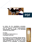 8ª Alim Zoogenos Bioi 1