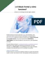 ¿Qué es el lóbulo frontal y cómo funciona