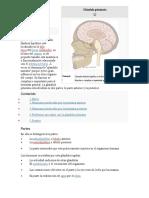 Glándula pituitaria