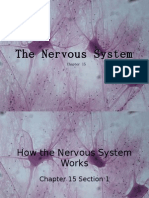 15-1 How the Nervous System Works Web