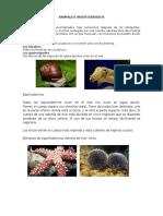 Clasificacion de Los Animales Vertebrados e Invertebrados