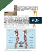 Investigación. Sistema músculo-esquelético y su relación con objetos