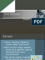 15-3 the Senses Web