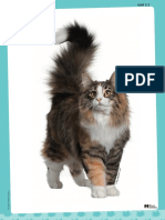 Flashcards Pets
