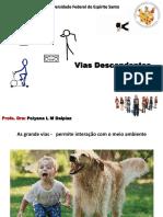 vias eferentes.pdf