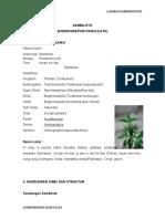 """laporan praktikum Farmakognosi """"Andrographidis Herba"""""""