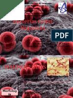 Bacterias Gram Negativas1.pptx