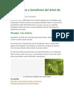 Propiedades y Beneficios Del Árbol de Ciprés