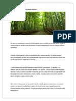 La Parabola Del Arbol de Bambu Chino