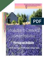 EXCELLENT Lavender Processing Distilling Web