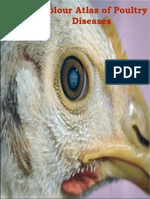 A Colour Atlas of Poultry Diseases | Poultry Farming | Infection