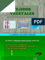 Tejidos Vegetales 1ºBAC (I)