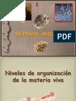 Tejidos Animales 1ºBAC (I)