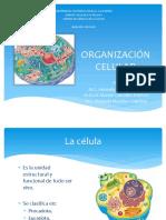 4 Estructura celular.pdf