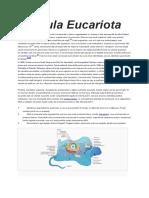 celula eucariota