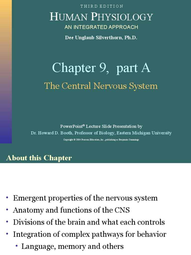 Pearson Cns | Brainstem | Nervous System