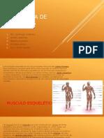 Diferencia de Musculos