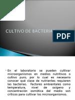 Presentacion de Cultivo de Bacterias