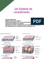 Tecido_Epitelial_de_Revestimento PRATICA 3.ppt