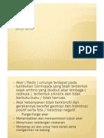 Morfologi Akar. PDF