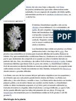 Dendrobium Nobile - EcuRed