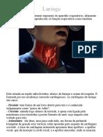 Anatomia Online - Laringe