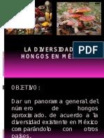 Micologia Biodiversidad en Mexico