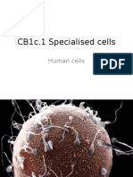 CB1c.1 Specialised Cells