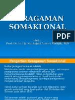 Keragaman Somaklonal_1
